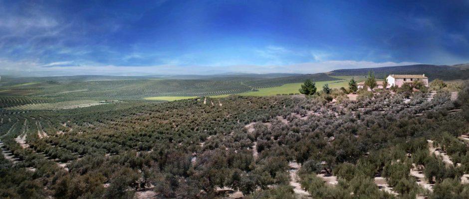 Campo-de-olivos-con-cielo-mas-azul-y-recorte-con-olivos-definitiva